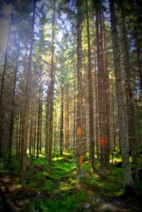 metsä2
